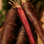Heirloom Purple Carrot